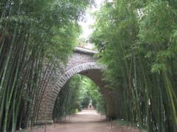 La forêt de bambous à anduze