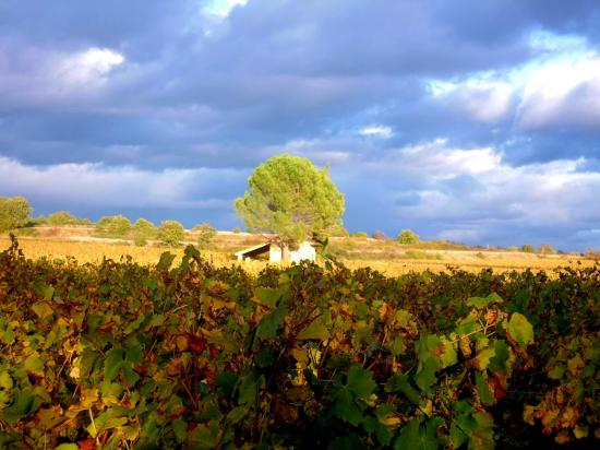 Vignobles en autommne à Lézan