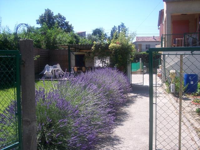 jardin, lavande