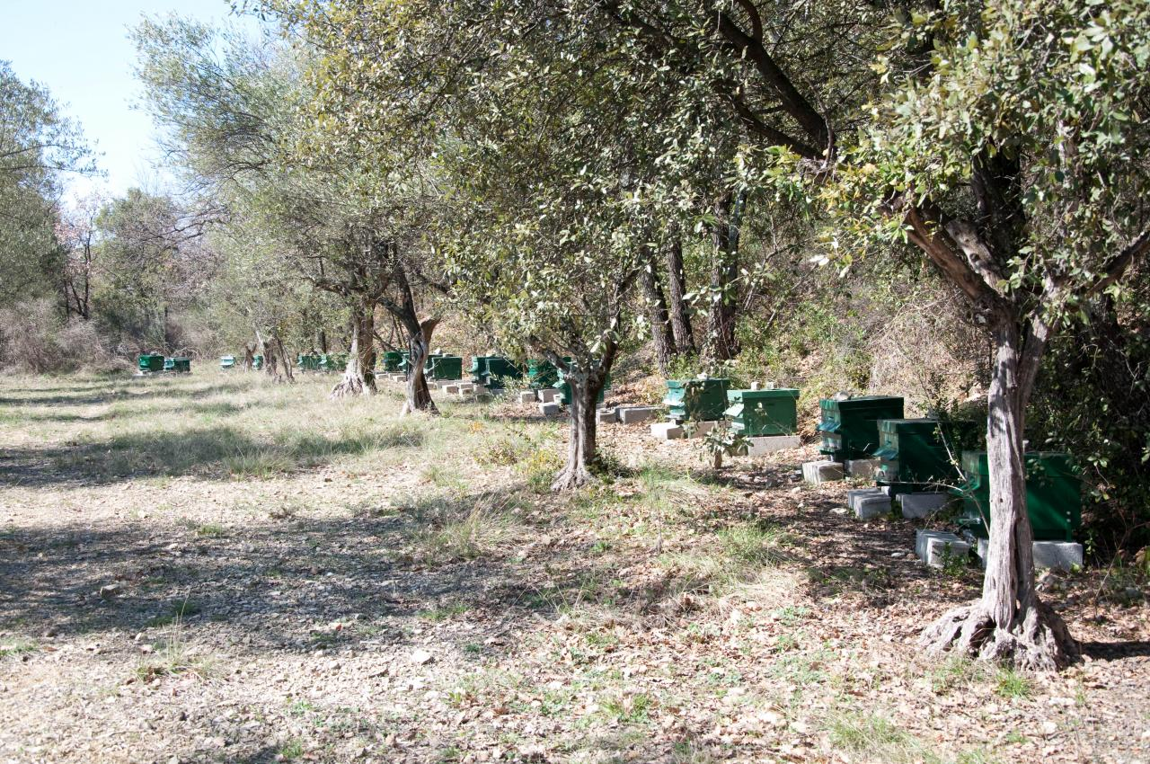 ruches de Daniel à Lézan Gard aux portes d'Anduze