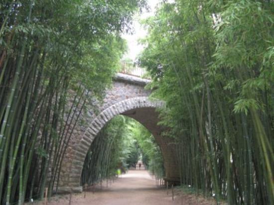 Prafrance, la forêt de bambous