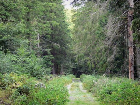 Vue du parc national des Cévennes