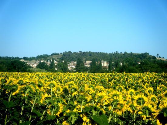 Lézan en venant d'Anduze devant un champ de tournesol