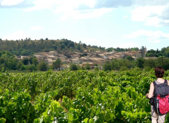Balades dans les vignes