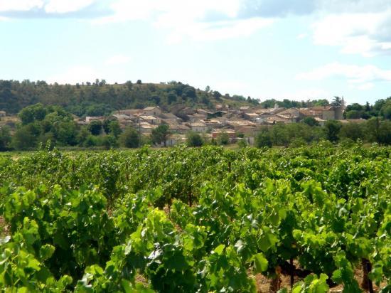 Panorama de Lézan pris en venant d'Anduze devant les vignobles.